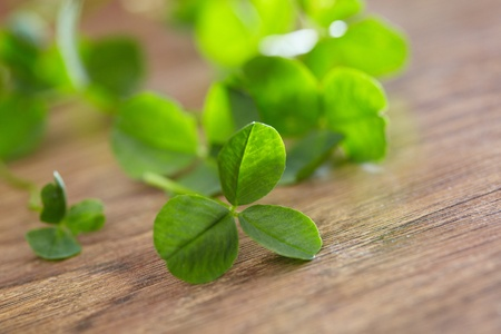 leaf clover on wood background Stock Photo - 16725333