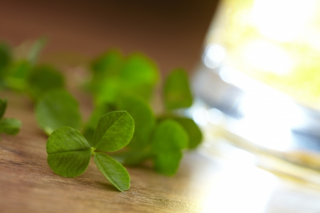 clover and beer Stock Photo - 16725226