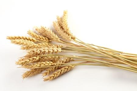 sheaf: Stalks of wheat ears