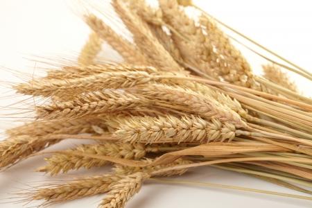 beardless: Stalks of wheat ears