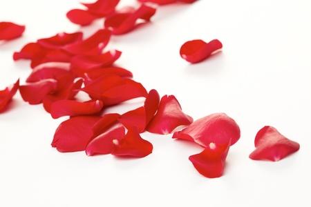 バラの花びらを背景 写真素材