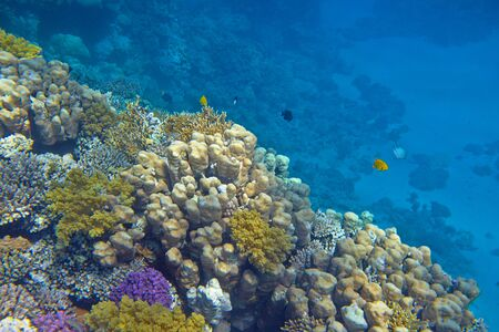coral reef Stock Photo - 30202124