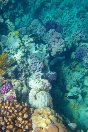 coral reef Stock Photo - 30201896