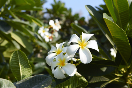 exotic flowers: exotic flowers