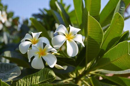 exotic: flores ex�ticas  Foto de archivo