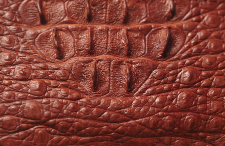 Alligator patterned background photo