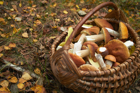 mushrooms in the basket Archivio Fotografico