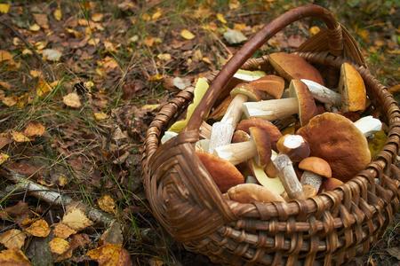 mushrooms in the basket Фото со стока