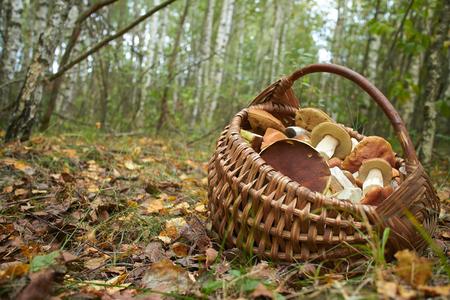 mushroom: setas en la cesta Foto de archivo