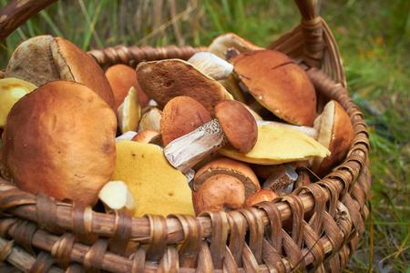 gills: mushrooms in the basket Stock Photo