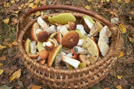 바구니에 버섯