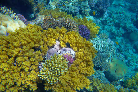 stony coral: coral reef