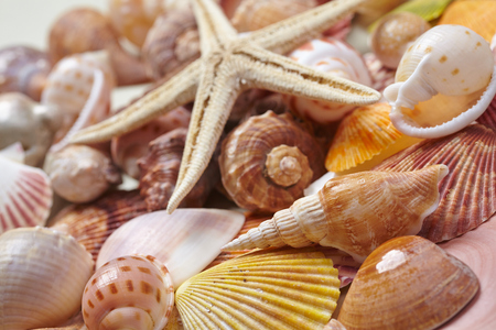 beach panorama: nice shells Stock Photo