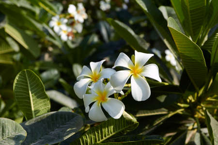 flores exoticas: flores exóticas  Foto de archivo