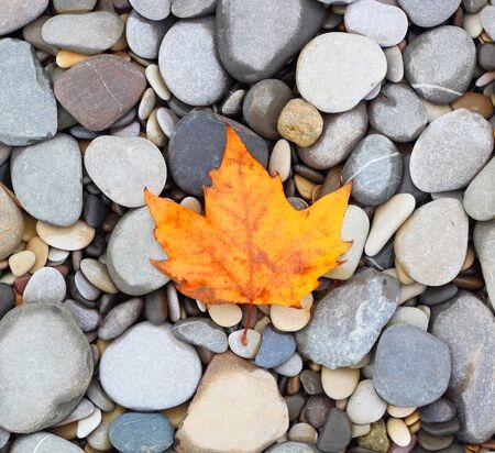 autumn leaf background sea stones black
