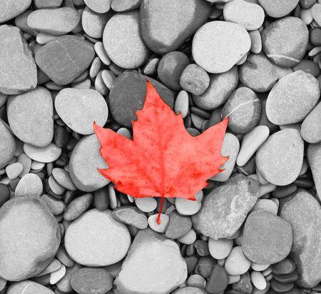 autumn leaf background sea stones