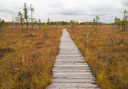 duckboards: Wooden path running through the swamp in Baikal reserve