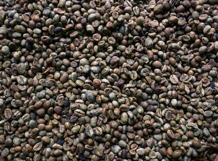 unroasted: Fresh, unroasted coffee beans produced Luwak civet Stock Photo