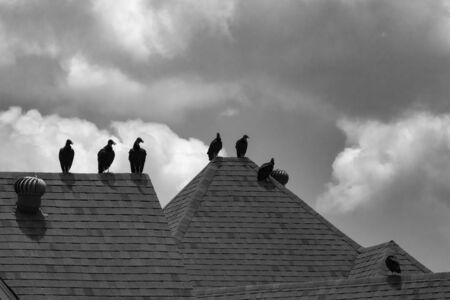 Photo en noir et blanc d'un petit troupeau de vautours noirs, ou buses, debout sur le sommet d'un toit de maison silhouetté sur un ciel nuageux. Banque d'images