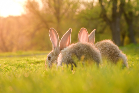 Cute baby rabbits on a green lawn sunshine