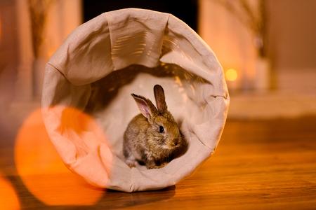 Nice and attentive rabbit in a small basket Reklamní fotografie