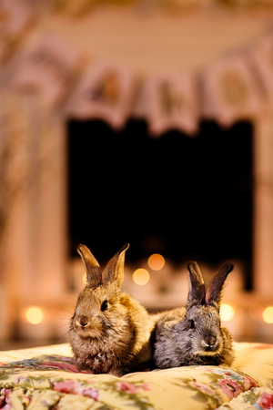 Two grey rabbits on a flowered cloth, warm lighted room. Two rabbits by the fireplace.