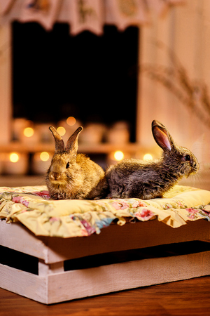 Two rabbits by the fireplace. A couple of curious and careful rabbits sitting on a wooden box. Blurred candles fireplace behind them. Reklamní fotografie