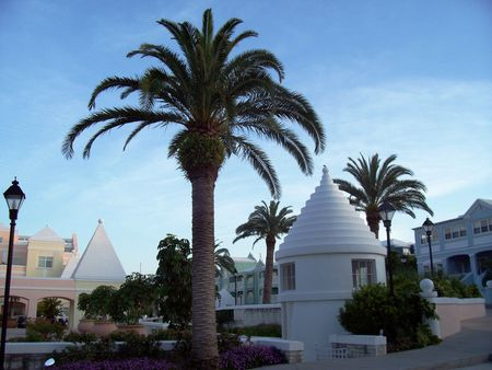 A touch of paradise in the business district of Bermuda.