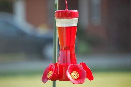 A brilliant red hummingbird feeder for birds in for the spring.