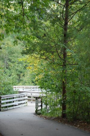 Wooden bridge. Local park with lush green trees, hiking path and peaceful environment with nobody around.