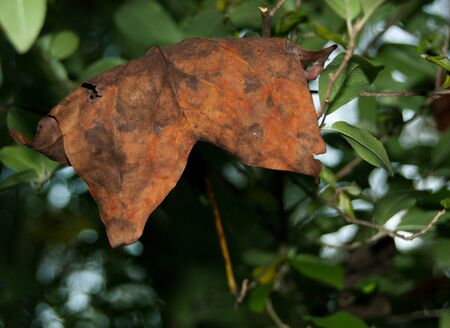 Rustic orange autumn leaf on a green background. Beautiful fall leaf sits on a natural background of natural foliage. Closeup in local park.
