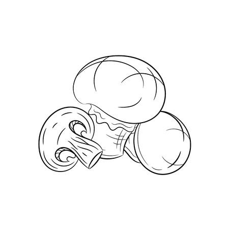 champignon: Champignon. Vector hand drawn champignon illustration isolated on white background