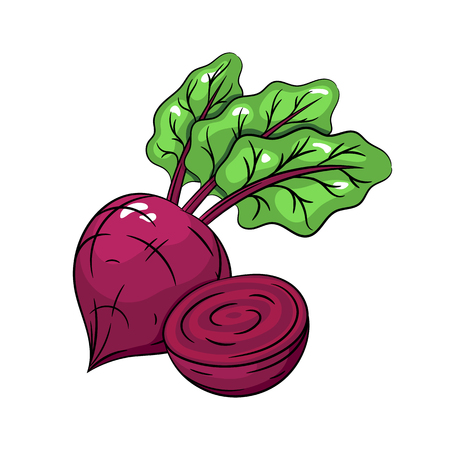 Vector beetroot illustration. Slice of beetroot, beetroot isolated on white background. Vector sketch hand drawn