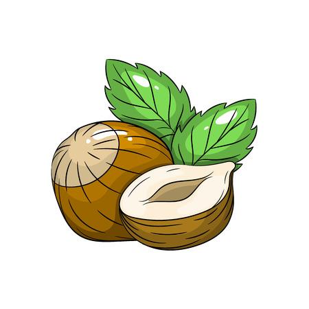 nutshell: Vector hazelnut illustration. Slice of hazelnut, hazelnut isolated on white background. Vector sketch hand drawn fruit