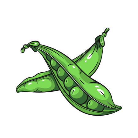 green peas: Vector green peas illustration. Green peas on white background. Vector sketch hand drawn fruit