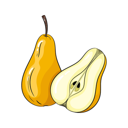 simple cross section: Vector pear illustration. Slice of pear, pear isolated on white background. Vector sketch hand drawn fruit Illustration