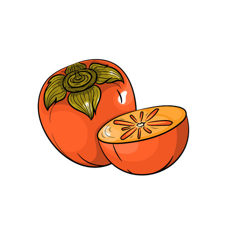 persimmon: Vector persimmon illustration. Slice of persimmon, persimmon isolated on white background. Vector sketch hand drawn fruit