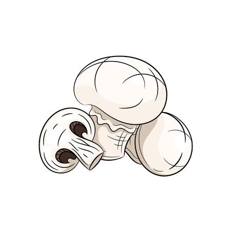 champignon: Vector champignon illustration. Champignon isolated on white background. Vector sketch hand drawn