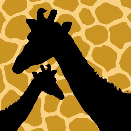 fell: Giraffe Hide Pattern with Giraffes