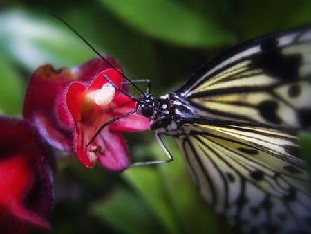 hexapod: Butterfly_03