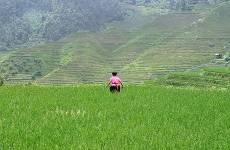 Female farmer at work on the Longsheng rice terraces, Guilin, China