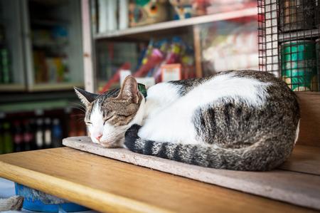 Pet cat sleeping outdoors 스톡 사진