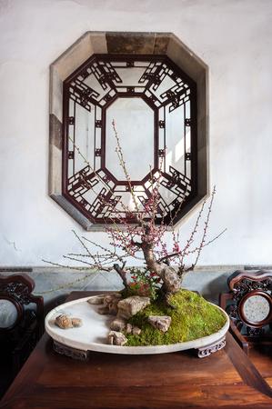 bonsai tree: Potted bonsai tree at the Lion Grove Garden, Suzhou, China
