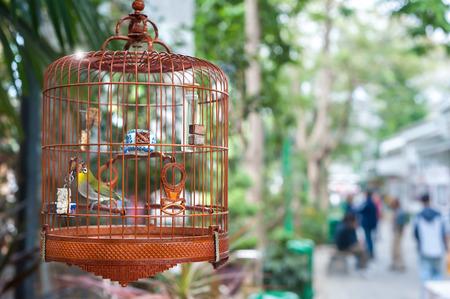 Small bird in a cage at Yuen Po Bird Market, Hong Kong