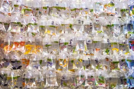 Tropical fish hanging in plastic bags at the Mong Kok goldfish market, Tung Choi Street, Hong Kong Stock Photo