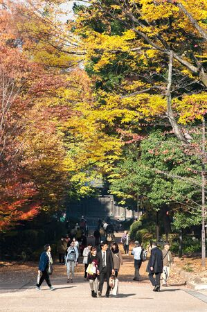 TOKYO, JAPAN - NOV 29, 2017 - People stroll beneath the colorful autumn leaves in Ueno Park, Tokyo Editorial