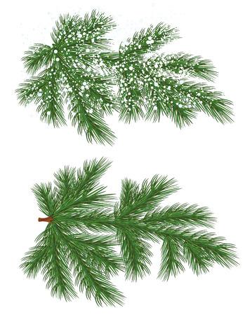 Vector geïsoleerd natuur Pine tak met sneeuw Stock Illustratie