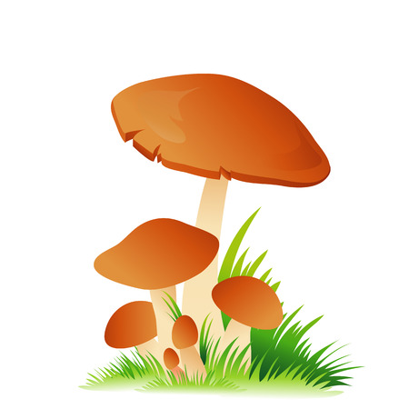 edible: Edible mushroom porcini with grass isolated on white background