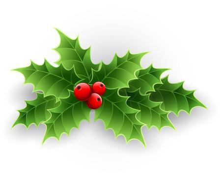 Vánoční Holly Berry na bílém. Vektorové ilustrace