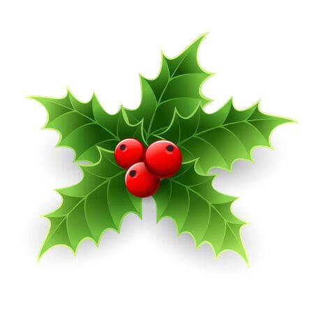 aquifolium: Christmas Holly Berry isolated on white. Vector illustration